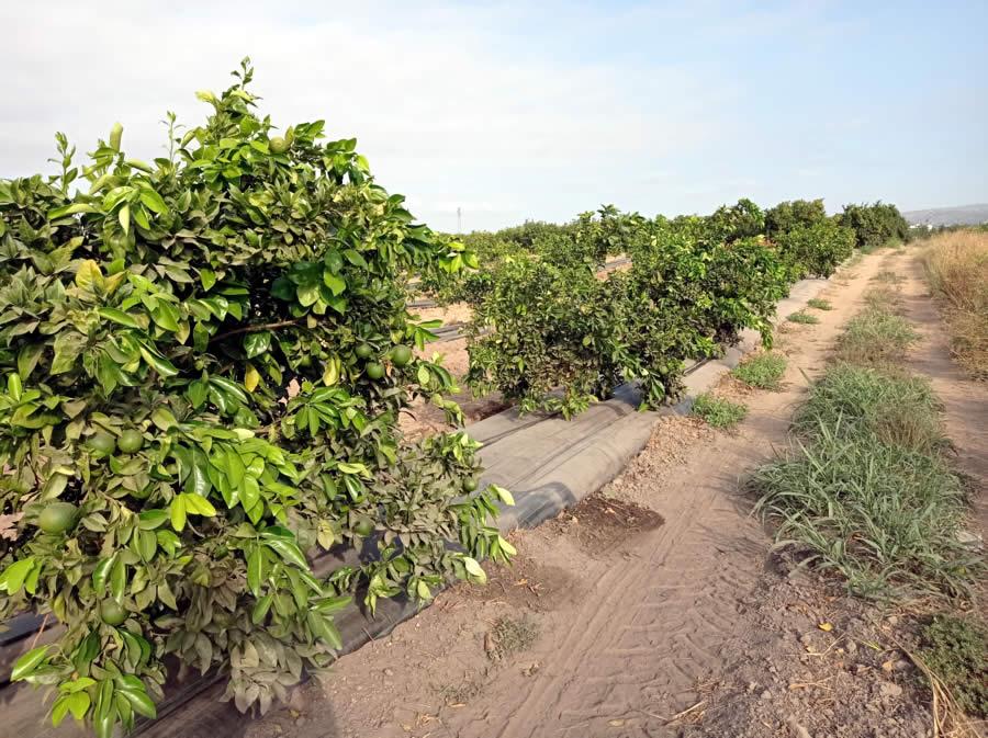 Vista de cultivo con malla antihierba